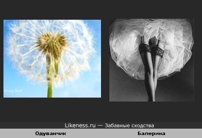 Одуванчик и балерина.
