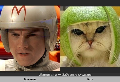 Кот похож на гонщика