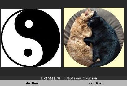 Ин-Янь и Кис-Кис