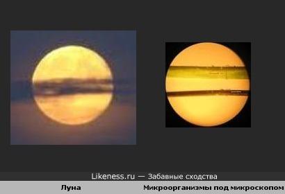 Луна и микроорганизмы под микроскопом