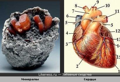 Минералы и сердце