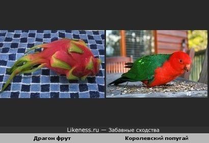 Драгон фрут и Королевский попугай