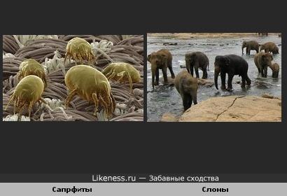 Сапрфиты и слоны