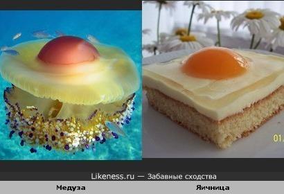 Медуза, и яичница
