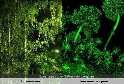 Ночной лес и Плесневые гриы
