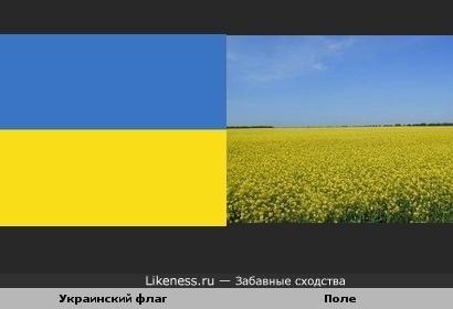 Украинский флаг и поле