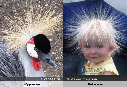 Журавль и ребенок