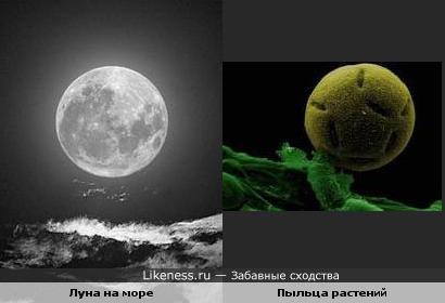 Луна на море и пыльца растений
