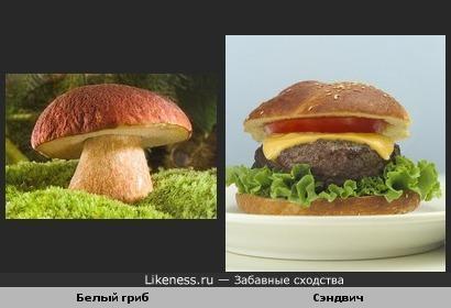 Белый гриб и сэндвич