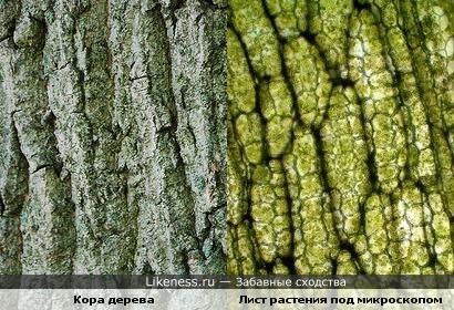 Кора дерева, и лист растения под микроскопом