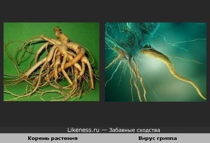 Корень растения и вирус гриппа