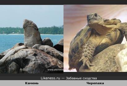 Камень и черепаха