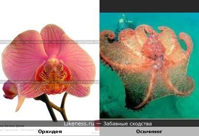 Орхидея и осьминог