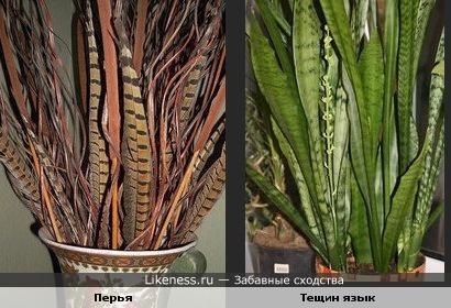 Перья и комнатное растение
