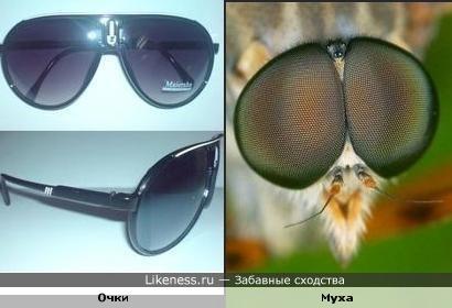 Очки и муха