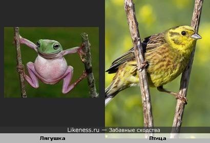 Лягушка и птица