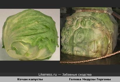 Кочан капусты и голова Медузы Горгоны