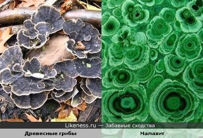 Древесные грибы и малахит