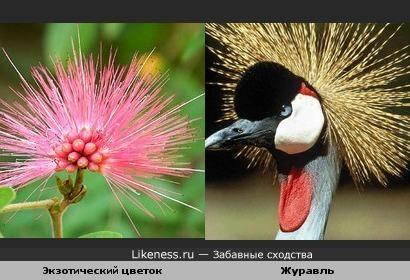 Экзотический цветок и журавль