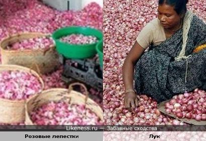 Розовые лепестки, и лук