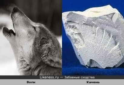 Волк и Камень