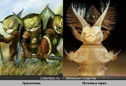 Гремлины и Личинка мухи