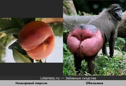 Инжирный персик и Обезьяна