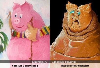 Свинья ( рисунок ) и Насекомое-паразит