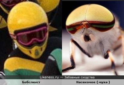 Бобслеист и Насекомое ( муха )