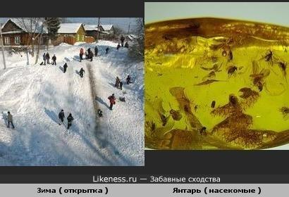 Зима ( открытка ) и Янтарь ( насекомые )