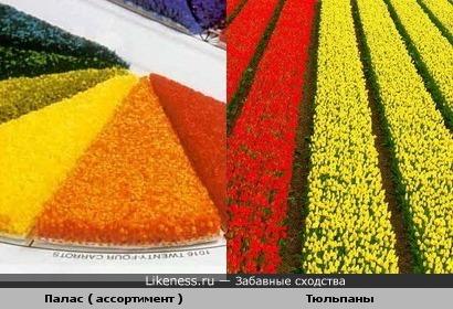 Палас ( ассортимент ) и Тюльпаны