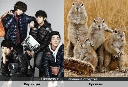 Корейцы и Суслики
