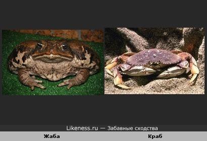 Жаба и Краб
