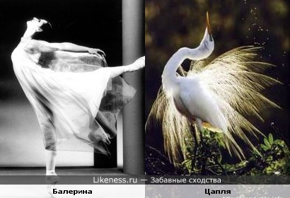 Балерина и Цапля