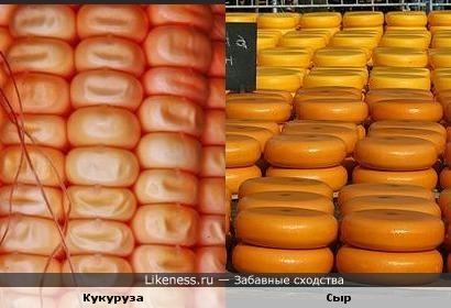 Кукуруза и Сыр
