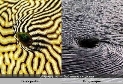 Глаз рыбы и Водоворот