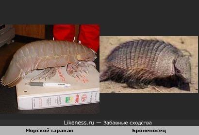 Морской таракан и Броненосец