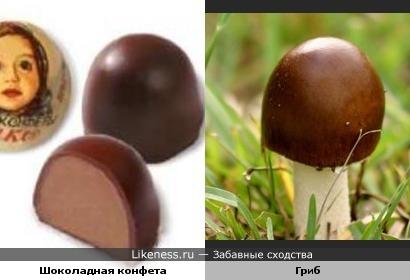 Шоколадная конфета и Гриб