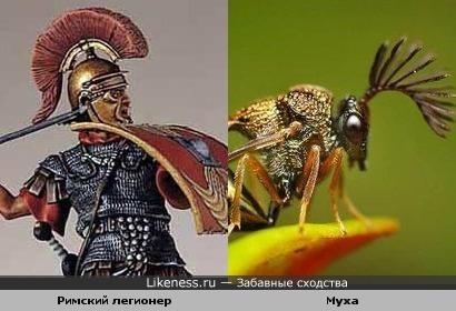 Римский легионер и Муха