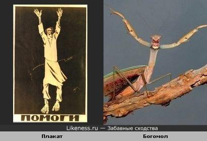 Плакат и Богомол