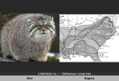 Кот и Карта