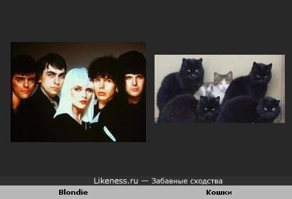 Blondie и Кошки