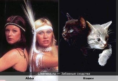 Abba и Кошки