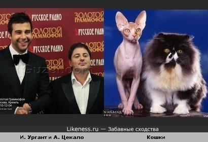 Иван Ургант и Александр Цекало - Кошки