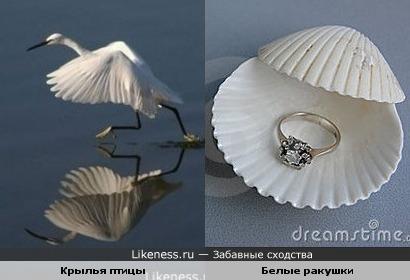 Крылья птицы и Белые ракушки