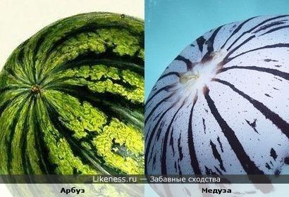 Арбуз и Медуза