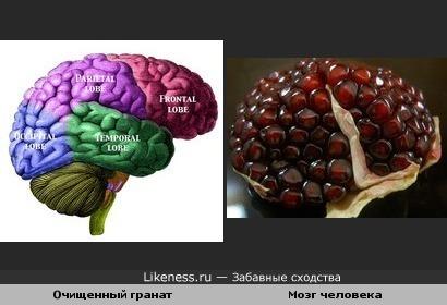 Очищенный гранат и Мозг человека