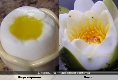 Яйцо вареное и Лотос