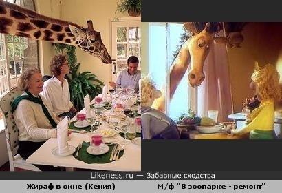 """Жираф в окне (Кения) и М/ф """"В зоопарке - ремонт"""""""