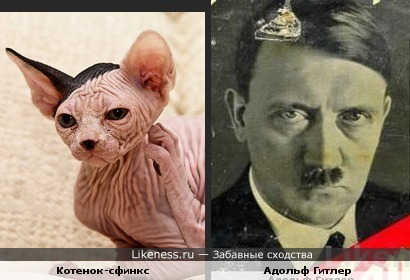 Котенок похож на Гитлера